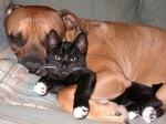 Opposites Snuggle