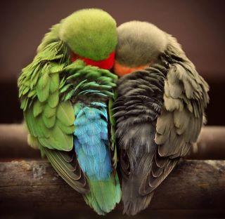 Bird Cuddle