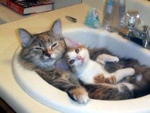 Kitties Snuggle on The Daily Snug
