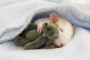 Mouse Snuggles a Teddy Bear at The Daily Snug