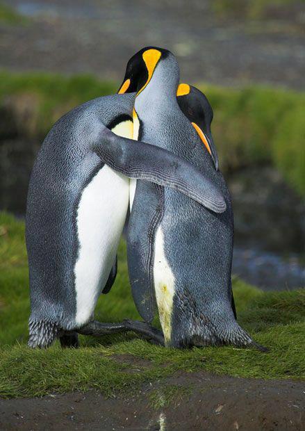 Birds hugging