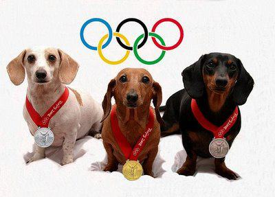 three dachshunds with Olympic medals