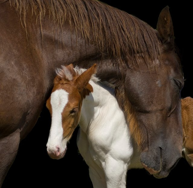Horse with new colt