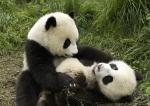 Playfully Natural Snuggle