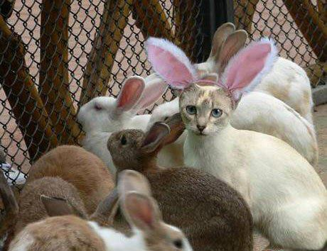rabbit ears on cat
