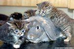 Pile On Snuggle