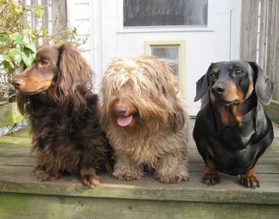three dog buddies