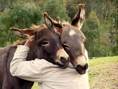 Donkey Hugs