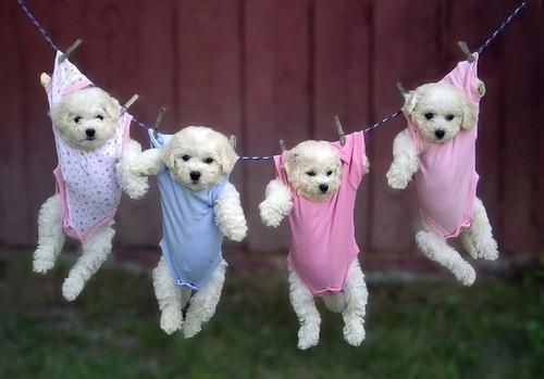 pups on a clothes line