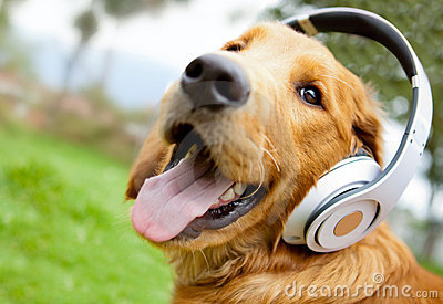 dog-with-headphone