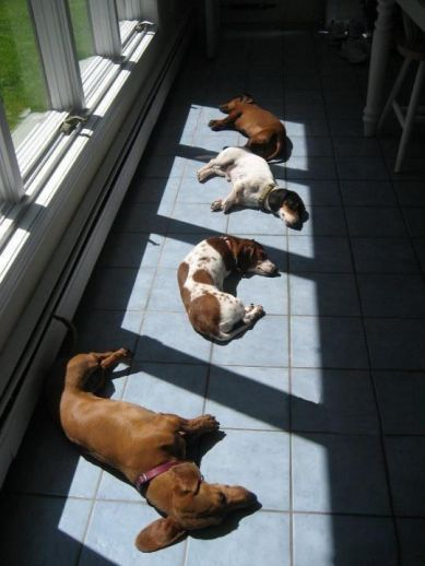 dogs laying in sun