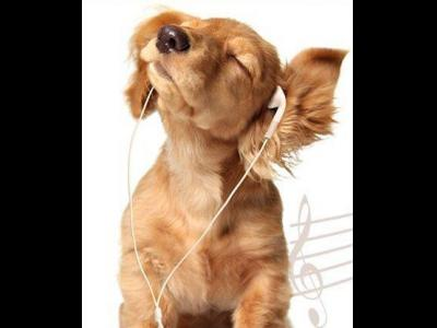 Musical Pup