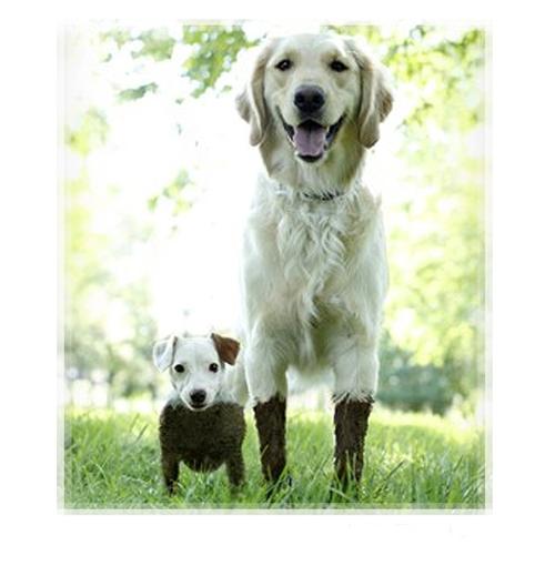 Short Dog, Tall Dog