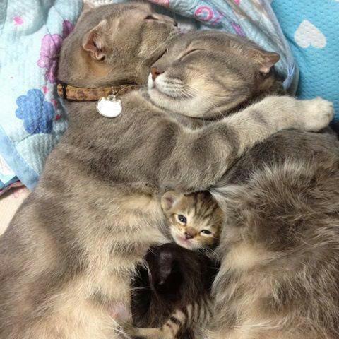 Snuggle cats