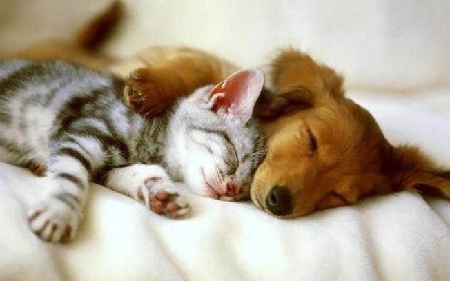 Dog-cat snug