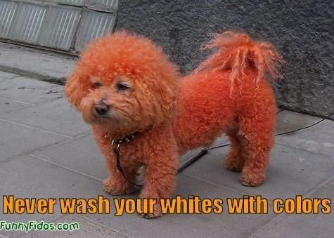 Orange pup