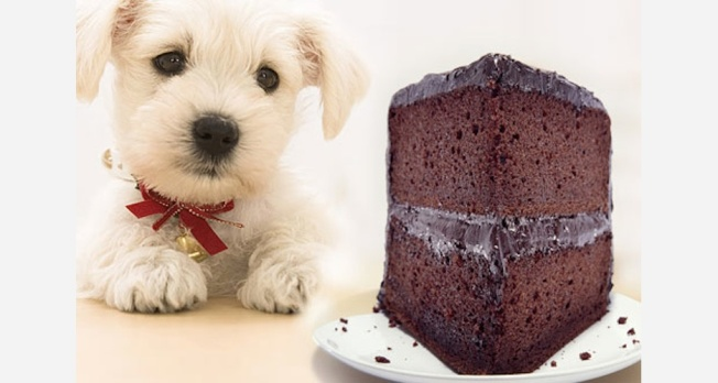 Dog wants cake