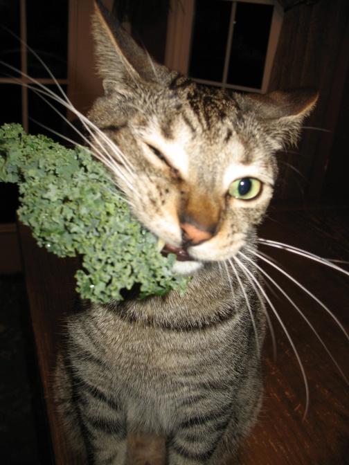 Kale Cat