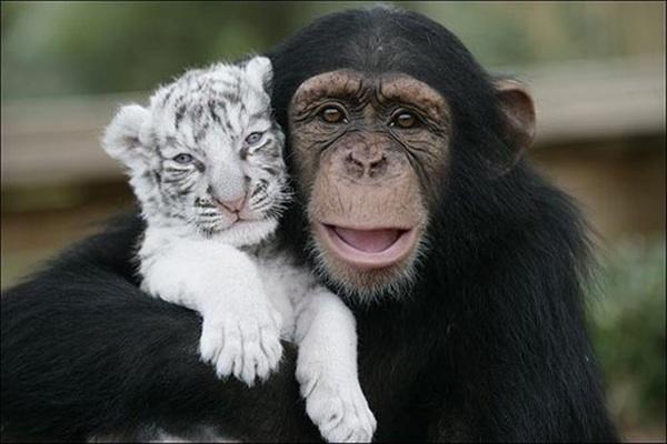 Monkey hugs