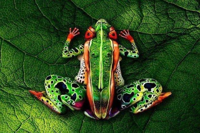 Human Frog