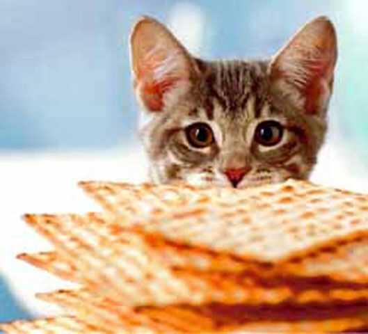 Kitty matzah